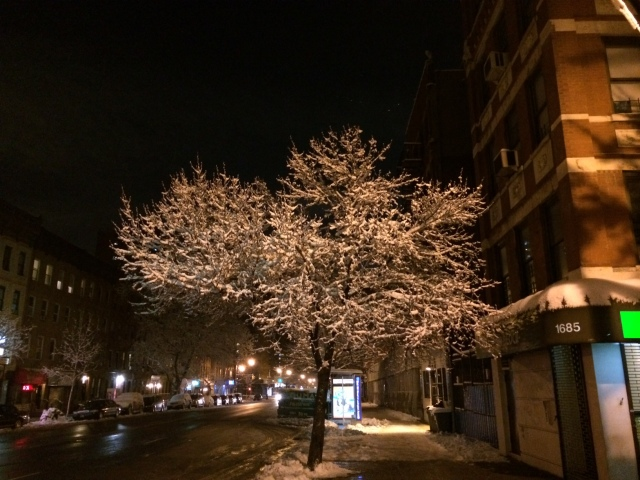 A snowy tree transforms a normal block into a thing of beauty. Craig Nelson, 2014.