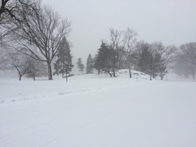 Central Park in white. Photo: Patricia Glowinski