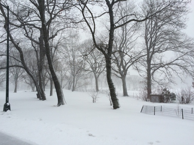 Let in snow...in Central Park. Photo: Patricia Glowinski