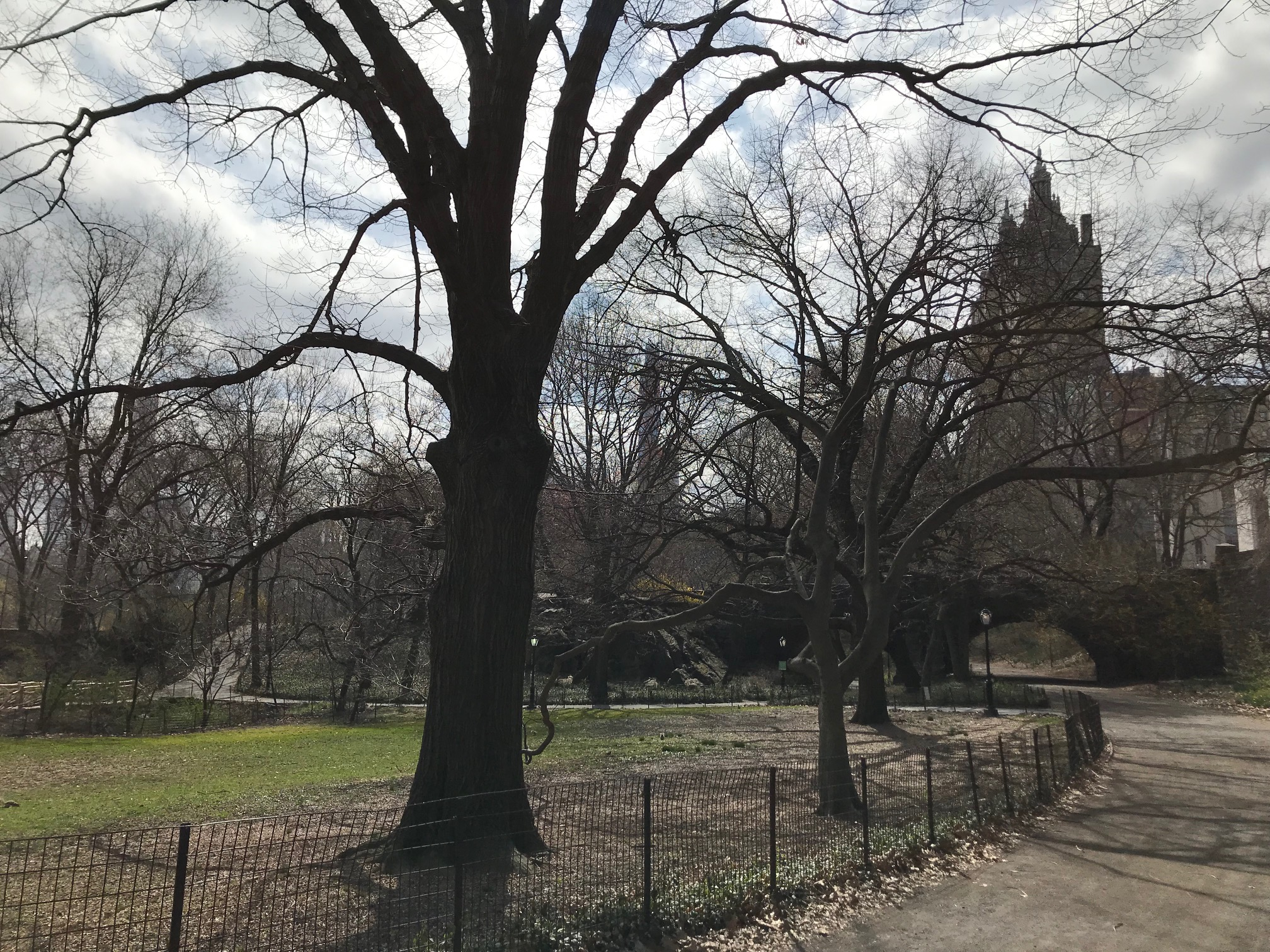 Empty Central Park