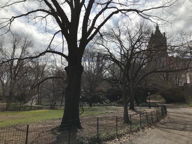 Empty Central Park